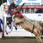 Le taureau peut être le premier sport professionnel américain à accueillir de nouveau les fans