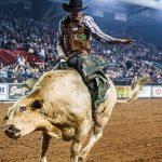 Le premier sport professionnel américain accueillera les fans, peut-être du Bull Riding