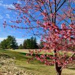 Clubs de golf de Wellesley: ce ne sera pas la même chose pour le parcours - The Swellesley Report